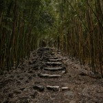 4315 Bamboo Forest, Pipiwai Trail, Maui, Hawaii