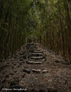 4315 Bamboo Forest, Pipiwai Trail, Maui, Hawaii