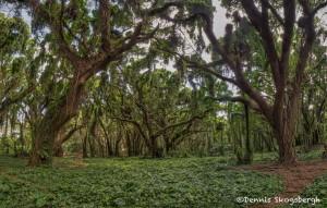 4316 Rainforest, Maui, Hawaii