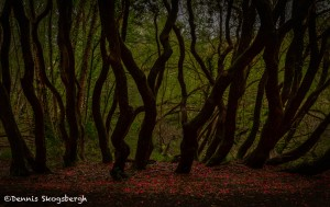 4353 Killarney National Park, Co, Kerry, Ireland