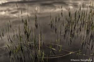 4359 Reflections, Lough Leane, Killarney National Park, Co. Kerry