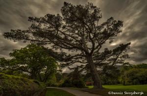 4362 Muckross Gardens, Killarney National Park, Co. Kerry, Ireland