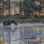 4452 Sunrise, Cow Moose, Algonquin Park, Ontario, Canada