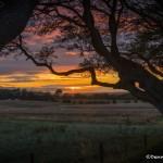 4640 Sunset at Dark Hedges, Northern Ireland