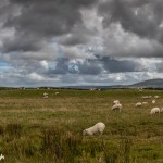 4644 Sheep Farm, Northern Ireland