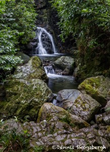 4661 Cascade at Tollymore Forest, Northern Ireland