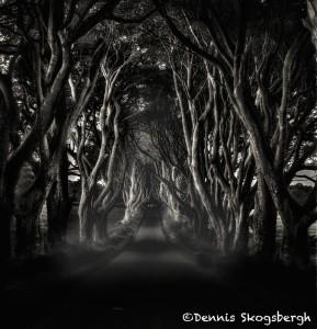 4666 Dark Hedges, Northern Ireland
