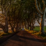 4691 Sunset, Dark Hedges, Northern Ireland