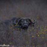 4715 Cape Buffalo, Dawn, Ngorongoro Crater, Tanzania