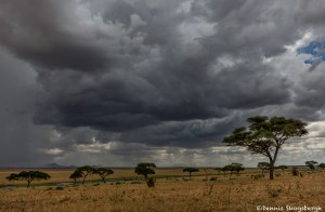 4738 Storms on the Serengeti, Tanzania