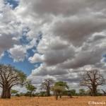 4741 Tarangire National Park, Tanzania