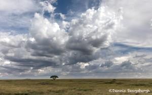 4764 Serengeti, Tanzania