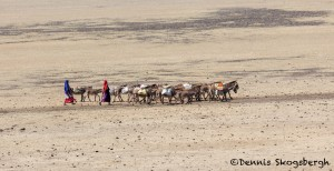 4768 Maasai People Transporting Water, Tanzania