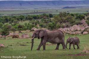 4773 African Elephants, Tanzania