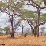 4776 Waterbuck (Kubus ellipsiprymnus), Tanzania