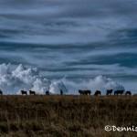 4804 Dusk, Serengeti, Tanzania