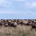 4815 Serengeti Migration, Tanzania