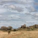 4819 Central Serengeti, Tanzania