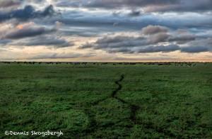 4823 Sunset, Central Serengeti, Tanzania