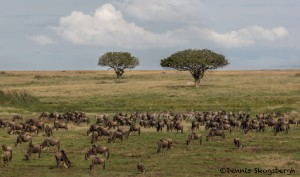 4827 Migration, Central Serengeti, Tanzania