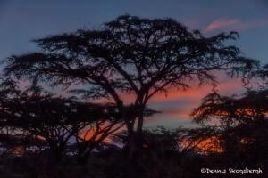 4847 Sunrise at Ngorongoro Crater Camp, Tanzania