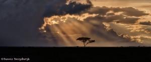 4848 Sunset, NE Serengeti, Tanzania