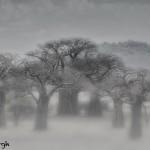 4865 Tarangire National Park, Tanzania