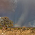 4869 Storms, Tarangire National Park, Tanzania