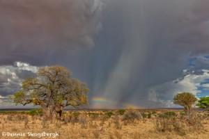 4869 Storms, Tarangire National Park, Tanzania