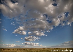 4896 The Endless Plains of the Serengeti, Tanzania