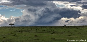 4913 Storms on the Serengeti, Tanzania