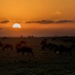 4925 Sunset, Serengeti, Tanzania