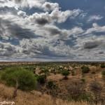 4932 Serengeti Landscape, Tanzania