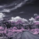 4984 Infrared Landscape, Tanzania