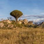 4998 NE Serengeti, Tanzania