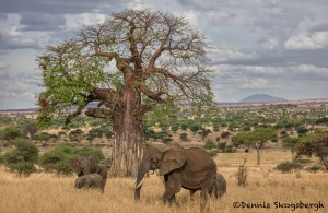 5004 African Elephants, Serengeti, Tanzania