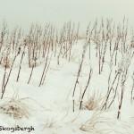 5085 Grasses, Hellnar, Iceland