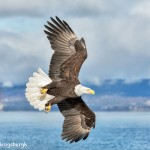5119 Bald Eagle, Homer, Alaska
