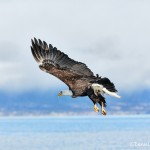 5120 Bald Eagle, Homer, Alaska