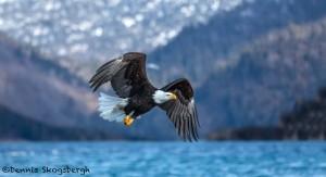 5183 Bald Eagle, Homer, Alaska