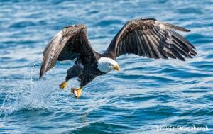 5185 Bald Eagle, Homer, Alaska