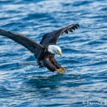 5187 Bald Eagle, Homer, Alaska
