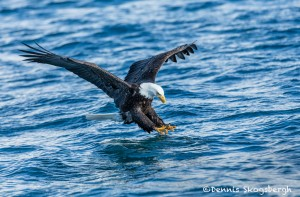 5187 Bald Eagle, Homer, Alaska