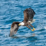 5191 Bald Eagle, Homer, Alaska