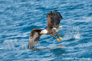 5191 Bald Eagle, Homer, Alaska