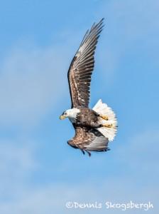 5192 Bald Eagle, Homer, Alaska
