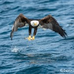 5194 Bald Eagle, Homer, Alaska