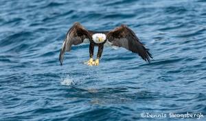 5194 Bald Eagle, Homer, Alaska