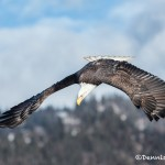 5195 Bald Eagle, Homer, Alaska