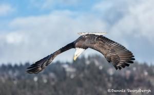 5195 Bald Eagle, Homer, Alaska